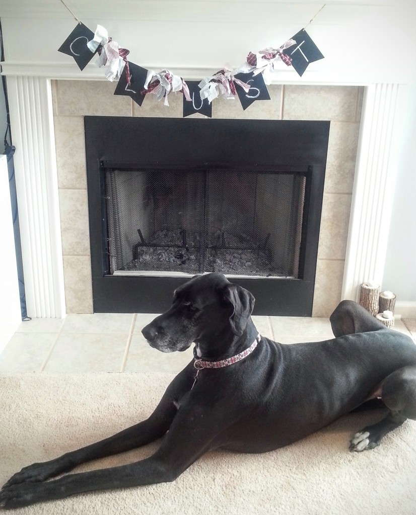 Lucy the Great Dane