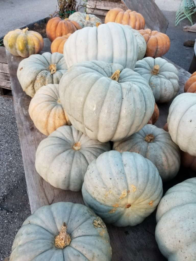 blue pumpkins, locally grown gardens, fall